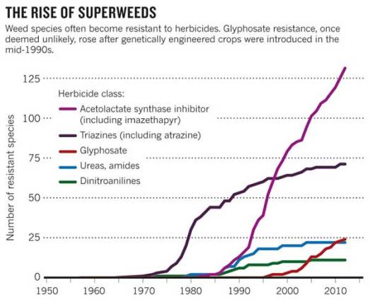 'The rise of superweeds'  Source: Scientific American